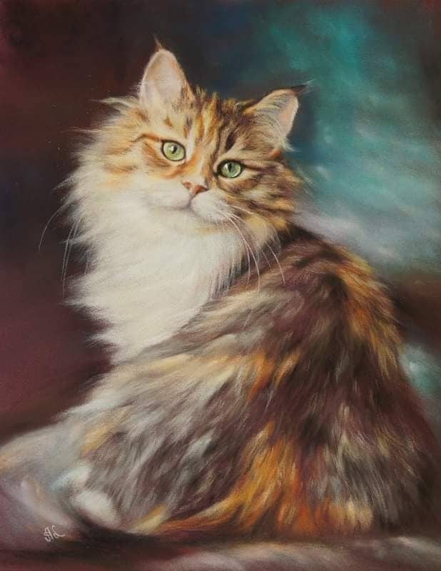 Siberian cat from cattery LyuMur