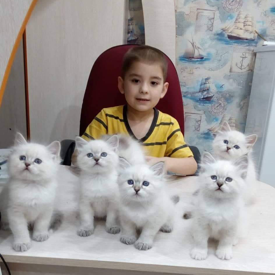 What cats are good with babies? Are Siberian and Neva masquerade cats good with children?