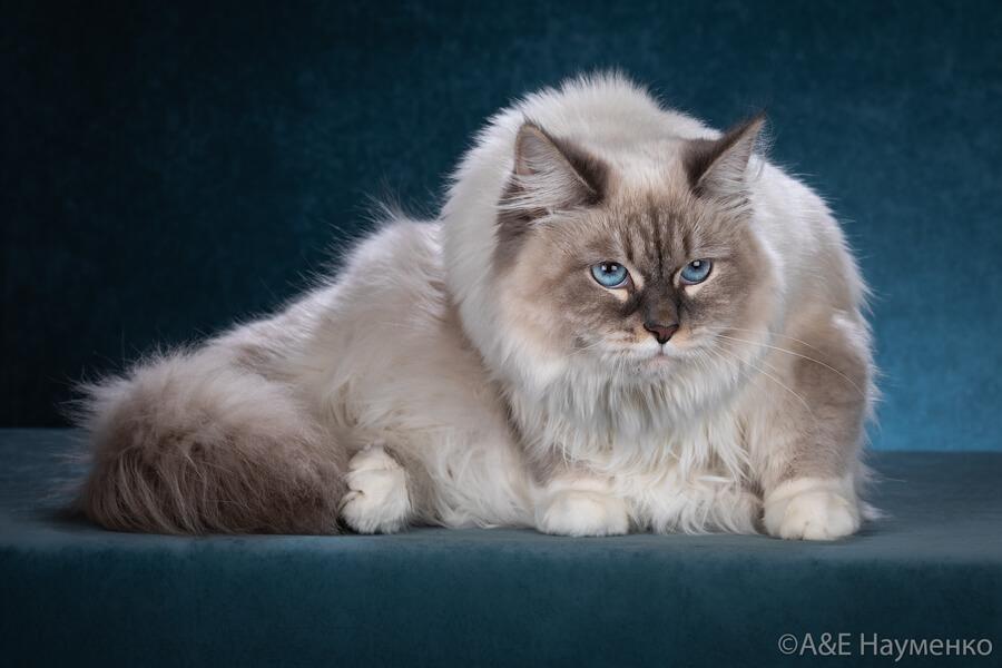 Blue-eyed Siberian beauty