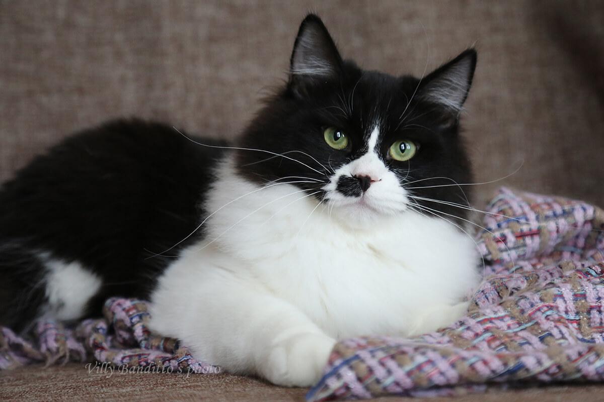 Котенок с зелёными глазами