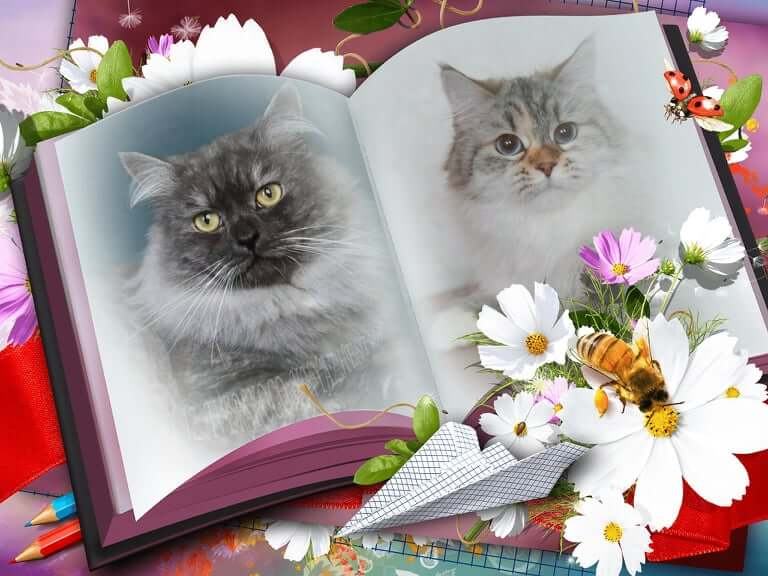Available Siberian traditional and Neva masquerade kittens from the beautiful Siberian couple